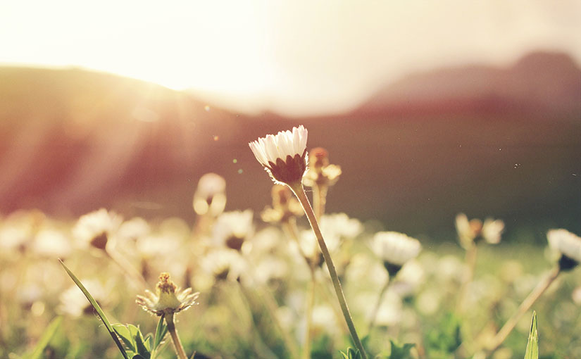 In a field of wildflowers illumined by the sunshine, only one flower is in focus. In this post on the dichotomy of truth and comfort, S. Wyatt Young explores how the words of C.S. Lewis in Mere Christianity can help us understand our culture's problems both inside and outside the Church.